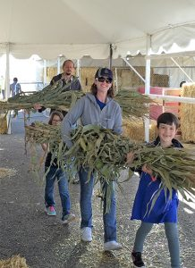 Family helping clear corn stalks